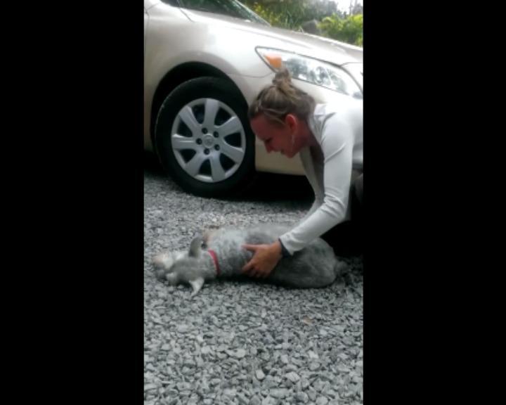 Passados dois anos sem ver a dona, cão «desmaia» com o seu regresso (YouTube)