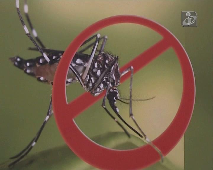 Madeira não regista casos de dengue desde 2012