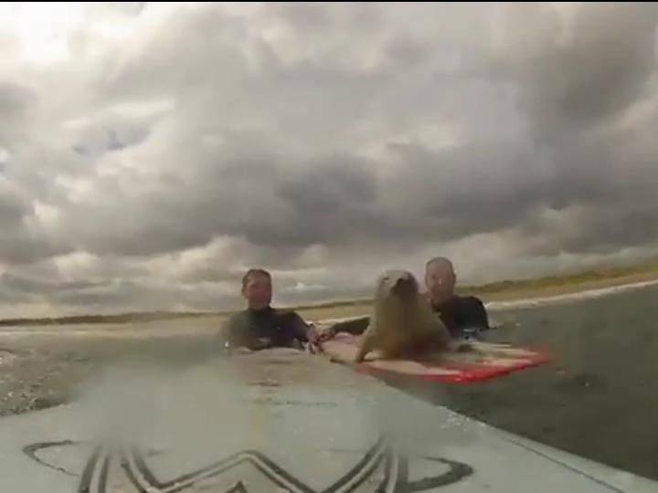 Foca suspreende ao saltar para a prancha para «surfar» (Reprodução Youtube)