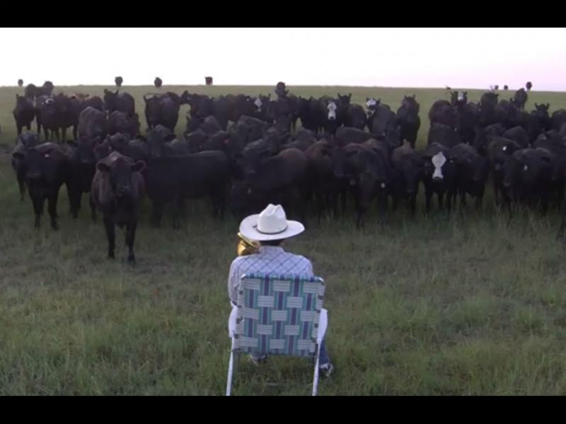 Hipnotiza manada de vacas a tocar trombone