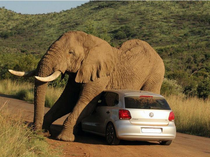 Elefante aproveita carro para se coçar (Foto: Facebook)