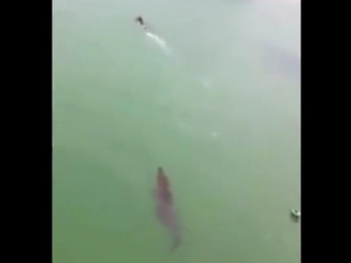 Crocodilo persegue menino (Youtube)