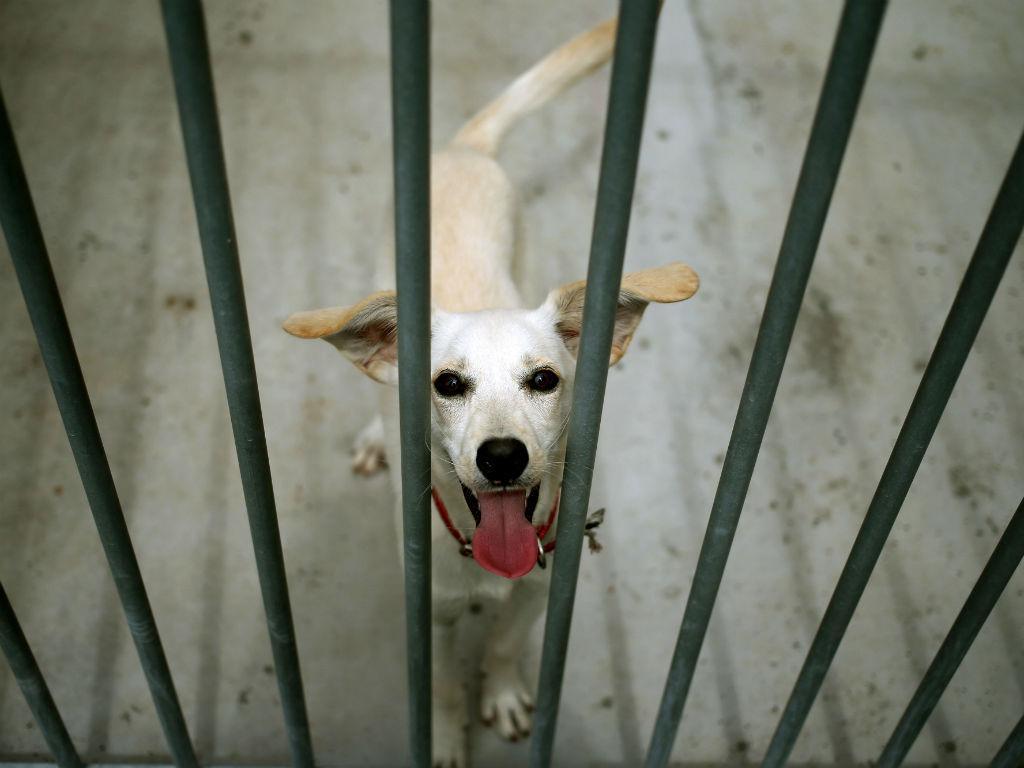 Cão (Lusa)