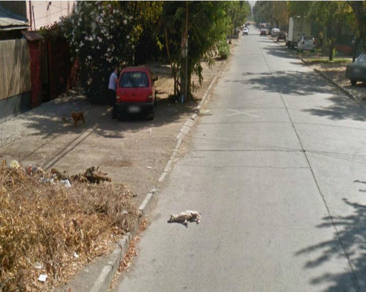 Cão poderá ter sido atropelado por carro da Google (Reprodução/ Google Street View)