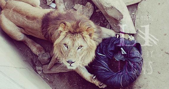 Leões, tigres e ursos criam modelos de calça de ganga  [Foto: Zoo Jeans]