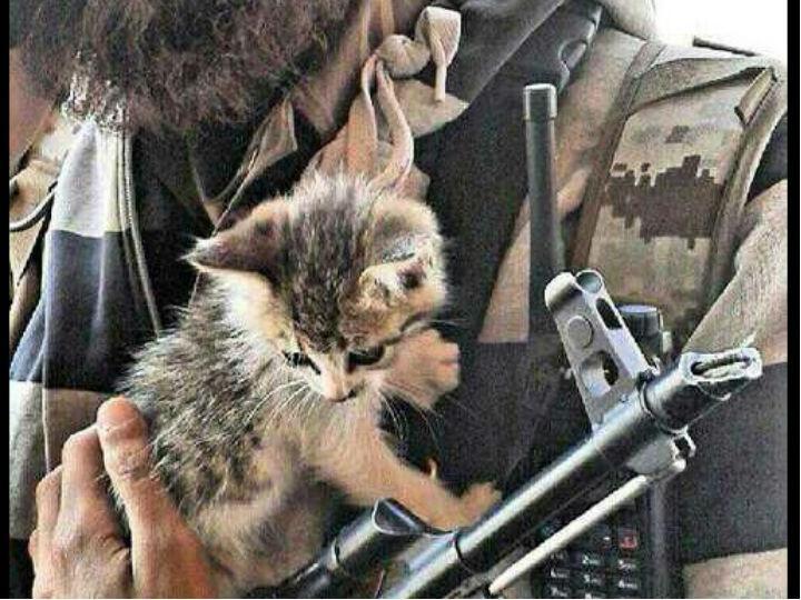 Conta no Twitter partilha fotografias das milícias do Estado Islâmico com gatos (Reprodução/Twitter)