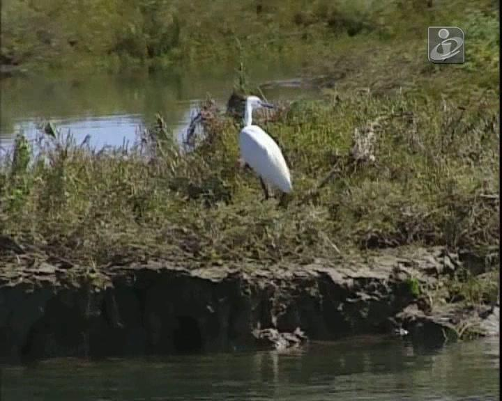 Ria Formosa: paraíso natural atrai turistas de todo o mundo