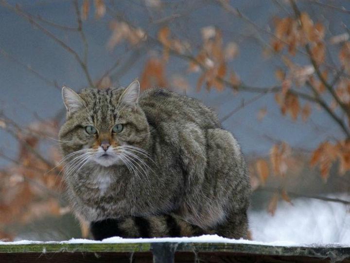 Escola foi fechada por causa de gato selvagem (Reuters)