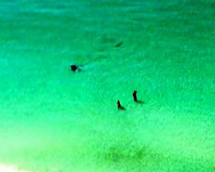 Banhistas foram surpreendidos por tubarão ao largo de uma praia da Florida, Estados Unidos (YouTube)