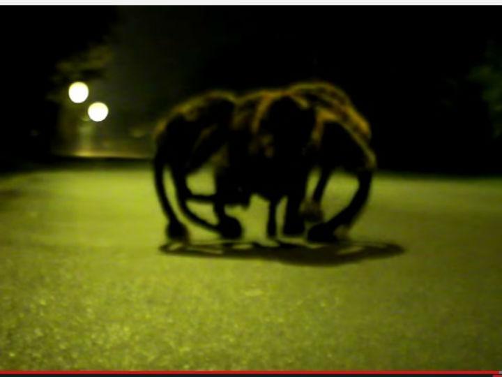 «Cão-Aranha»