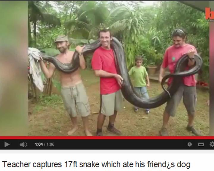 Homem captura anaconda de 79 kg com as mãos  [Foto: Reprodução/YouTube/N-joy]