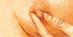 peito