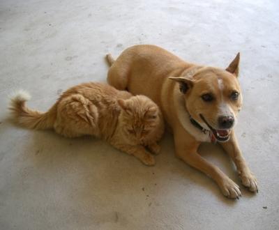 Cão e gato [Arquivo]