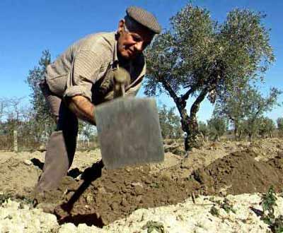 Agricultor (arquivo)