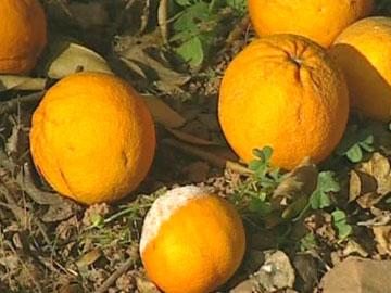 Agricultura é o sector mais afectado pela seca