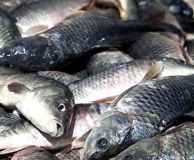 Resultado de imagem para caixas de pescada