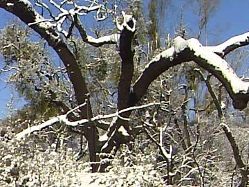 Nevou na serra do Caldeirão