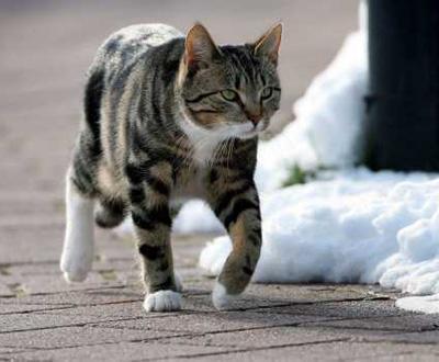 Gato [arquivo]