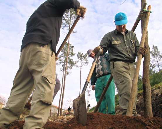 Plantação de árvores (foto Lusa)