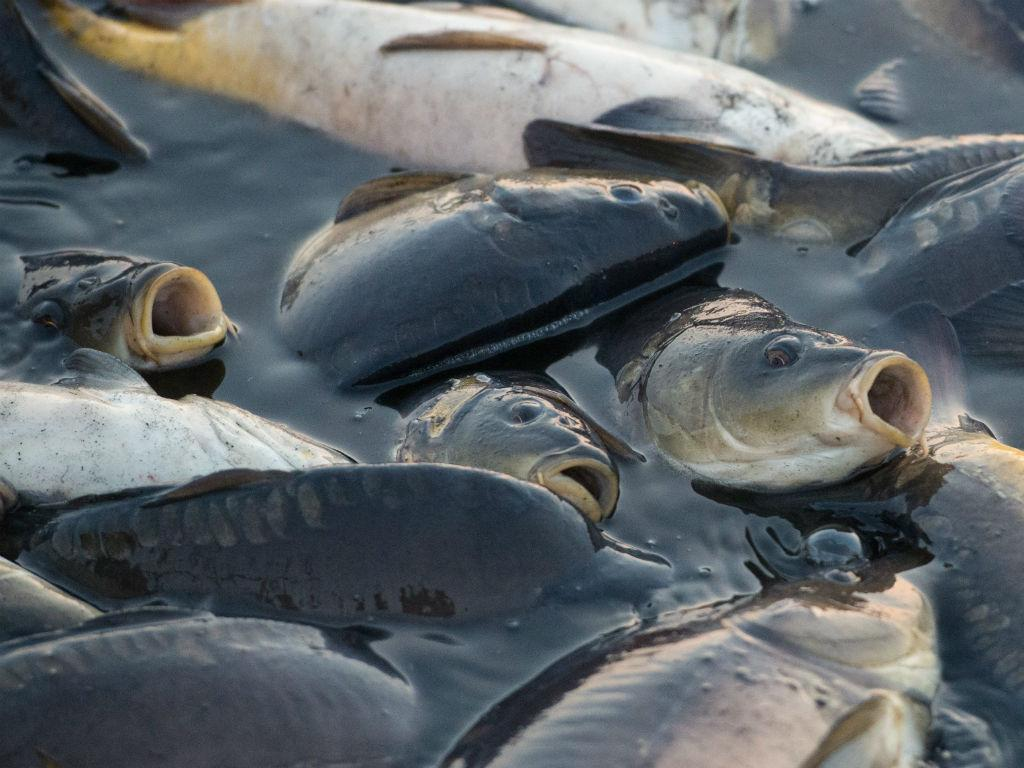 Peixe (LUSA/EPA)