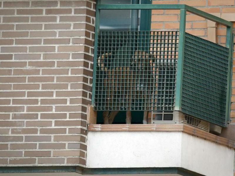 Cão da espanhola com ébola [Foto: Reuters]