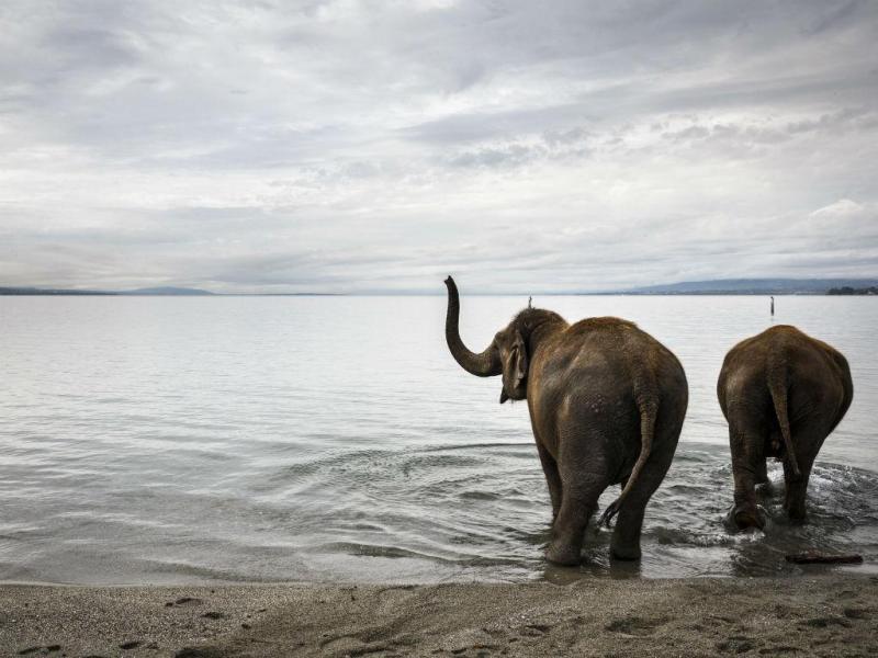 Elefante (LUSA/EPA)