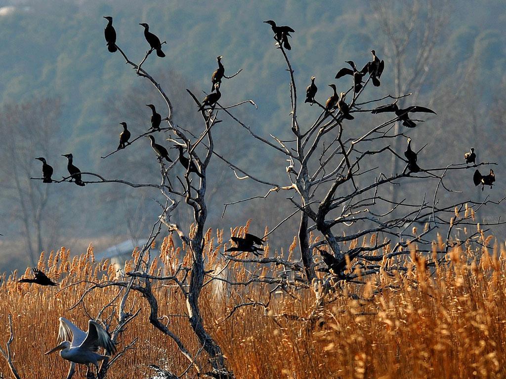 Aves (LUSA/EPA)