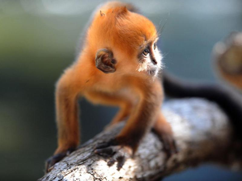 Macaco (LUSA/EPA)