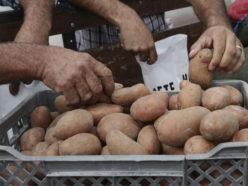Protesto dos produtores de batatas (LUSA)