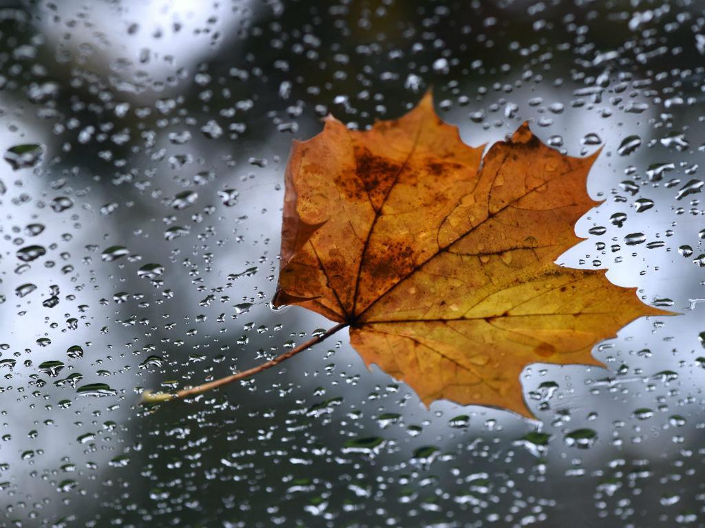 Outono (LUSA/EPA)