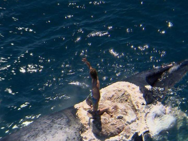 Surfista saltou para topo de baleia morta quando esta estava rodeada de tubarões (Twitter)