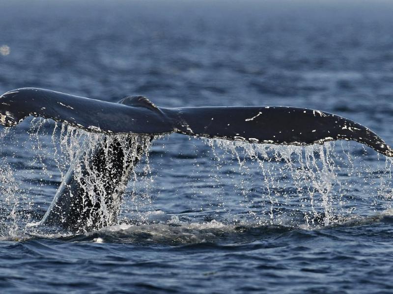 Baleia anã (Reuters)
