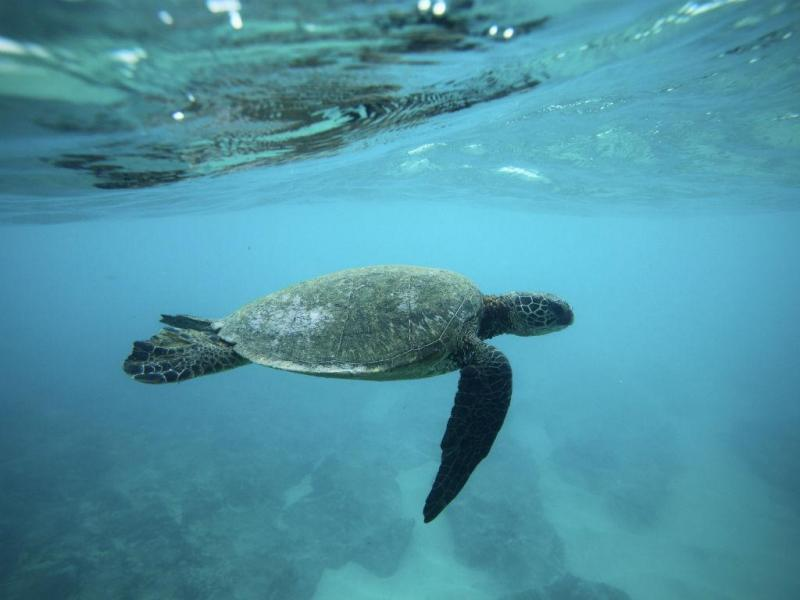 Tartaruga marinha (Reuters)