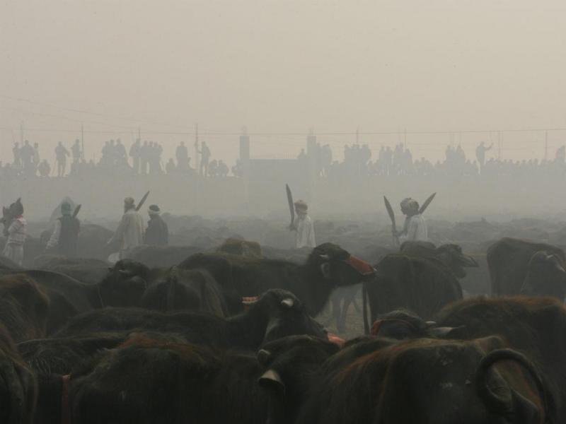 Sacrifício de animais no Nepal (Reuters)