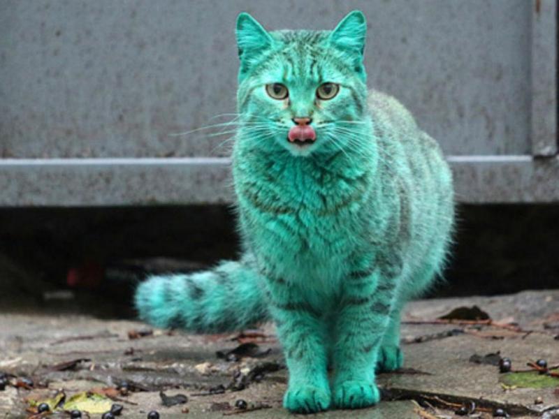 Gato verde na Bulgária (Reprodução YouTube)