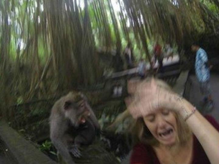Selfie com macaco - 2ª fotografia