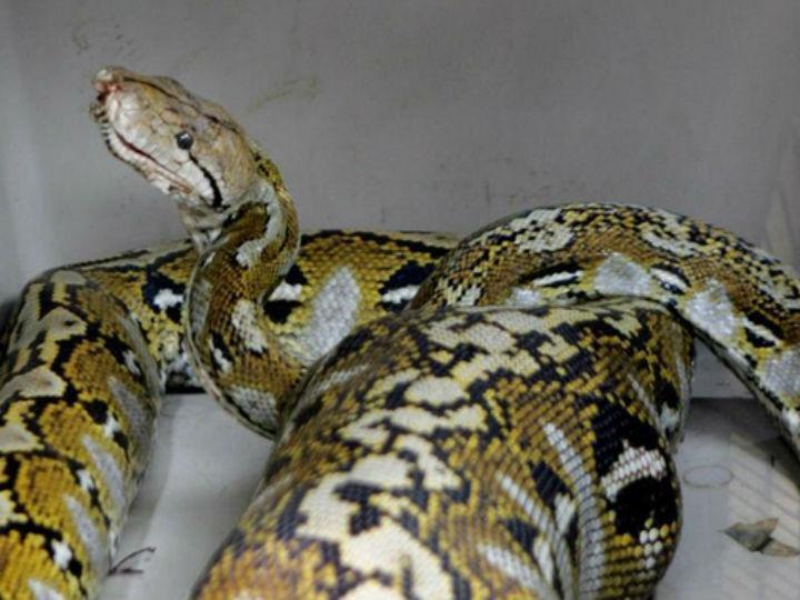 Python (Reuters)