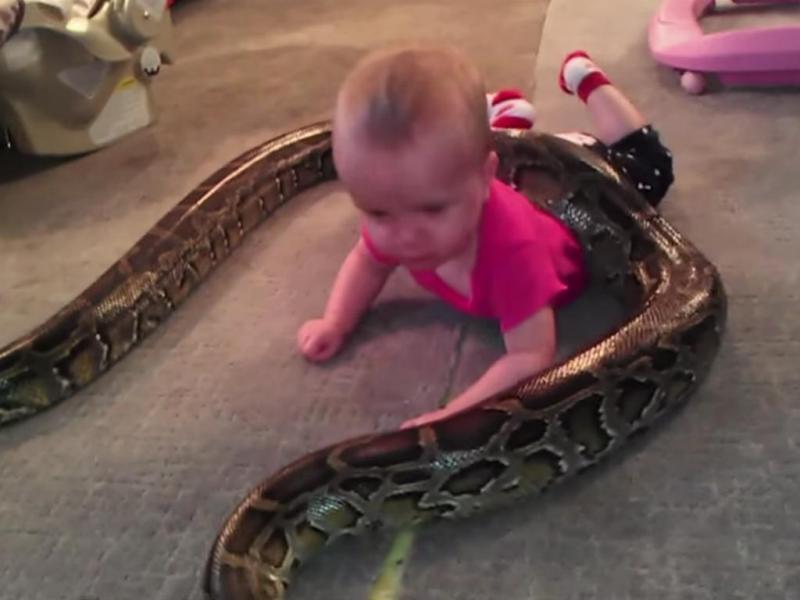 Bebé brinca com piton (Reprodução / Youtube / Barcroft TV)