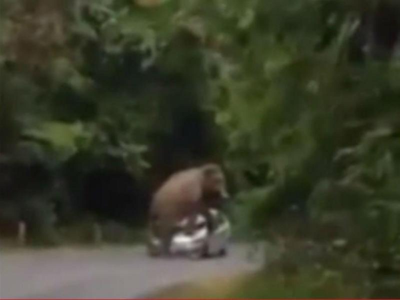 Elefante esmaga carro na Tailândia (YouTube)
