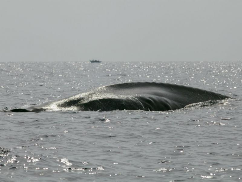 Baleia-azul (REUTERS)