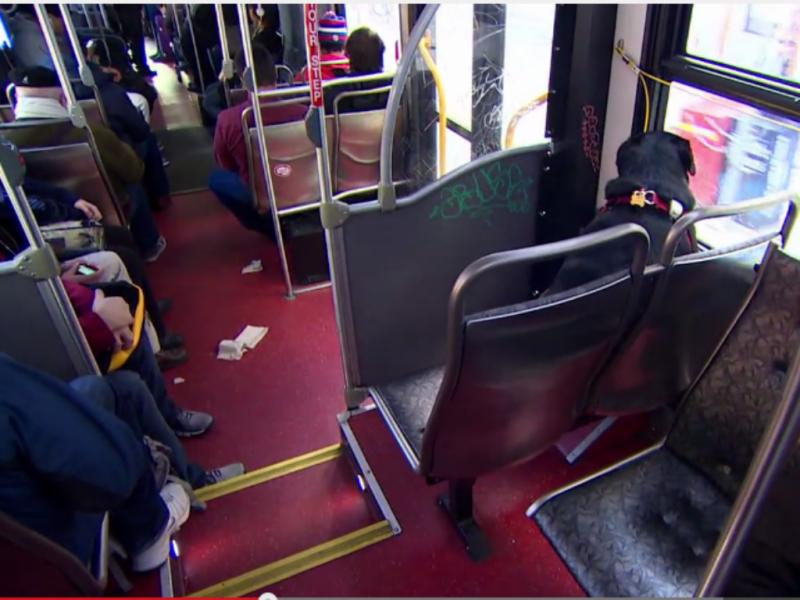 Eclipse apanha o autocarro sozinha para o parque de cães