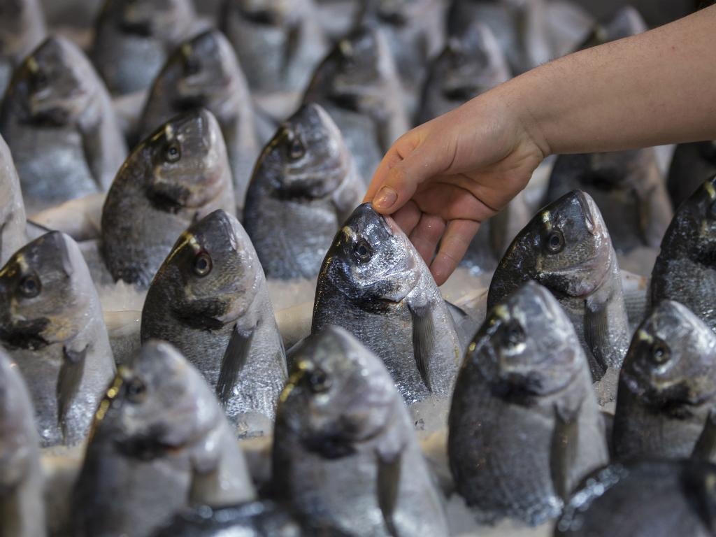 Peixe [Reuters]
