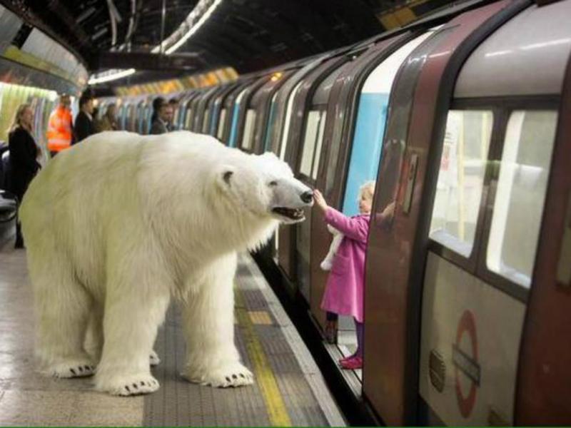 Urso polar no metro de Londres [Divulgação]
