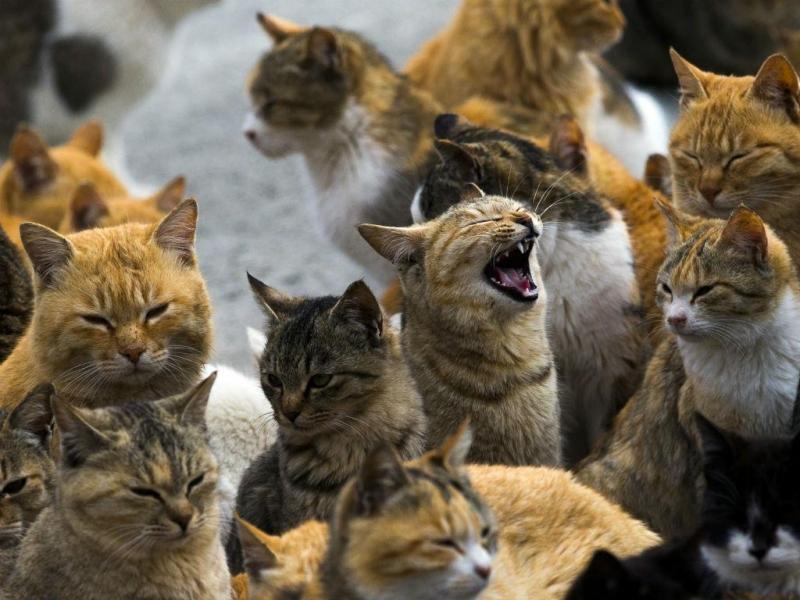 A ilha dos gatos (REUTERS)