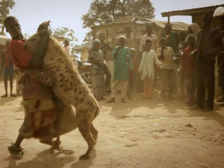 Hiena «abraça» treinador em espetáculo na Nigéria