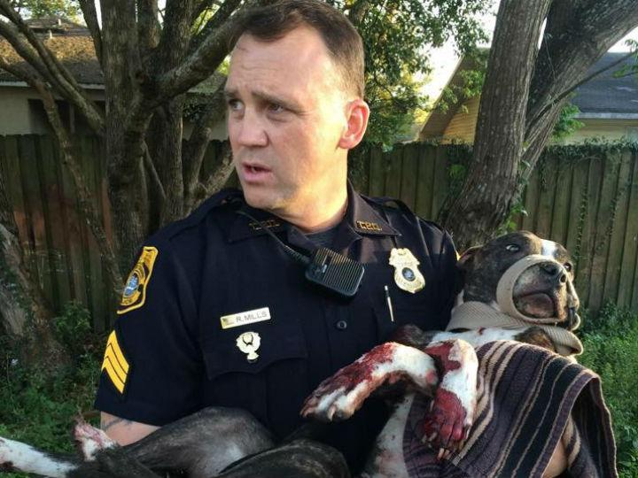 Cão encontrado ferido e atado a carris (Facebook Tampa Police Department)