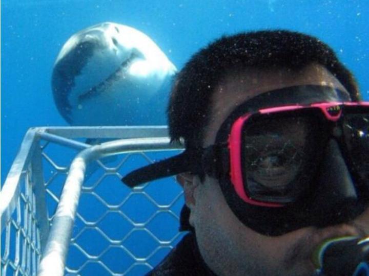 Selfie com tubarão (Twitter)