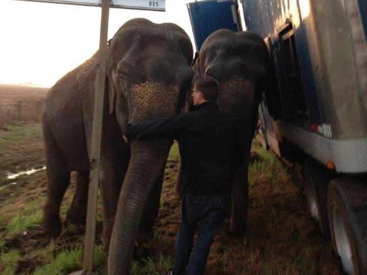 Os elefantes ajudaram o camião a manter-se direito
