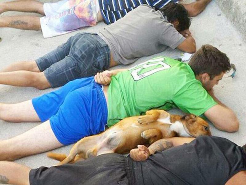 Cão leal deita-se ao lado do dono que é detido (Twitter)