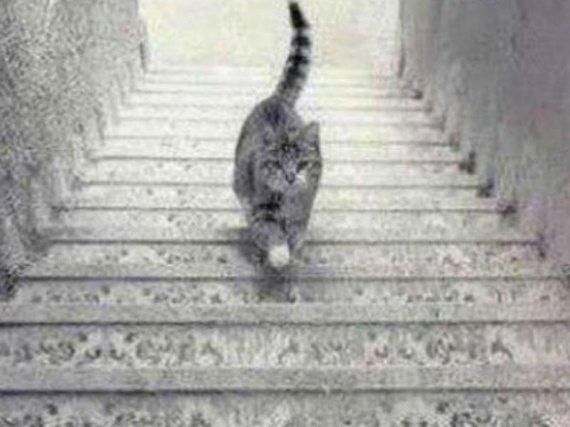 Gato (reprodução)